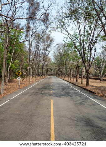road with dry tree.