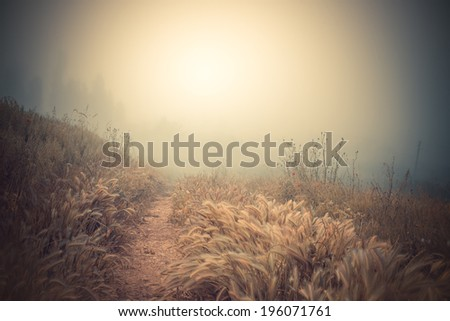 road with fog in the morning - stock photo