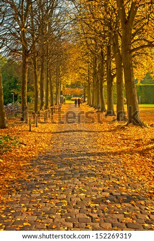 Road with leaves in autumn - stock photo