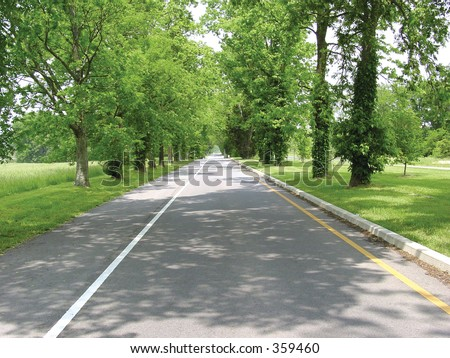 road with line of trees - stock photo