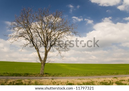 Road with tree alley in countryside with blue sky with clouds - stock photo