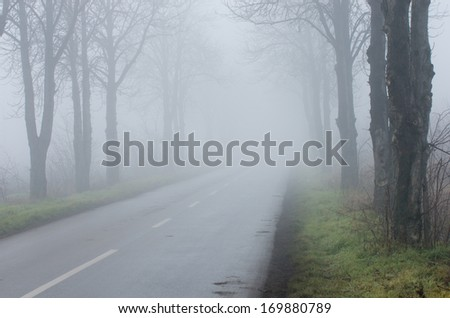 Road with tree alley on thick fog, short sighted ahead - stock photo