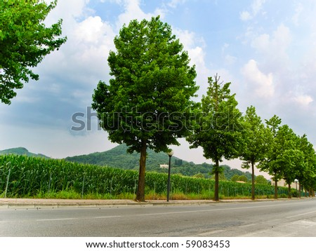 road with trees - stock photo