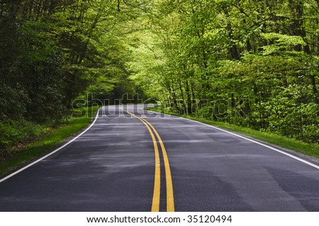 road with trees on both sides - stock photo