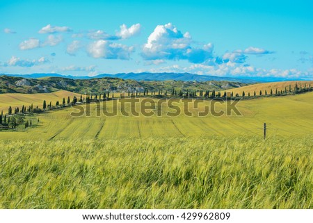 roads in the countryside in central Tuscany with cypresses fields of wheat and bales of hay on the Crete di Siena white clouds and blue sky