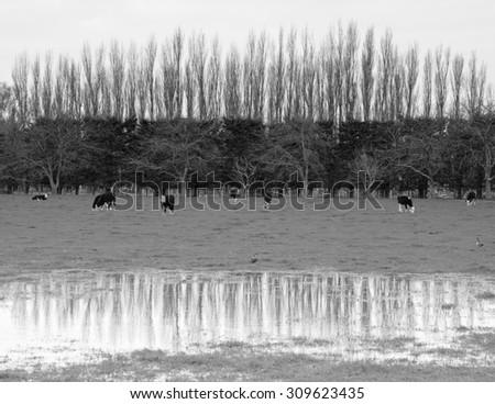 roadside trees rural Gisborne, New Zealand  - stock photo