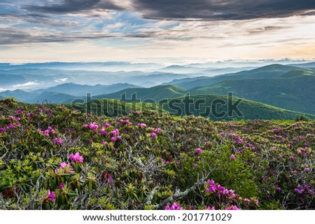 Roan Highlands Southern Appalachian Mountain Scenic with Catawba Rhododendron Blooms along the Appalachian Trail - stock photo