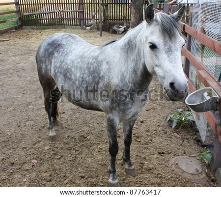 Roan horse - stock photo
