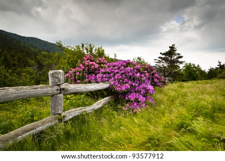 Roan Mountain State Park Carvers Gap Rhododendron Flower Blooms Nature outdoors with wooden fence - stock photo