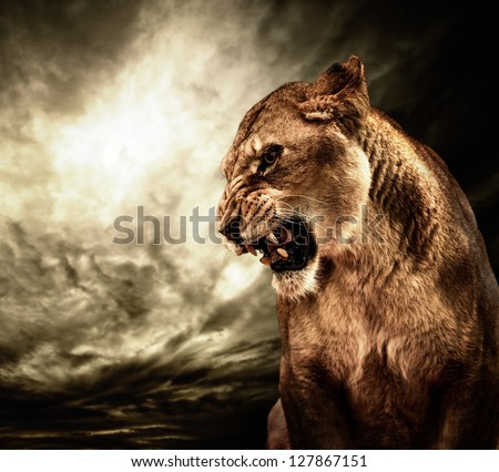 Roaring lioness against stormy sky - stock photo