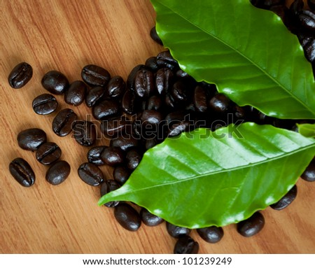Roasted coffee  beans and coffee leaf  on wood texture.