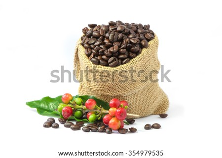 Roasted coffee beans in burlap sack , red and green coffee beans on a branch of coffee tree with leaf on white background. - stock photo