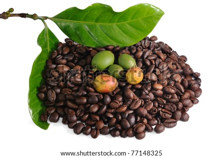 Roasted coffee beans, raw coffee seeds and coffee leaf isolated on a white background.