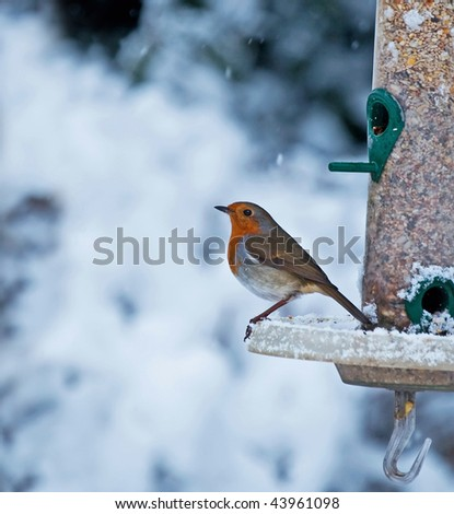 Robin and Snow - stock photo