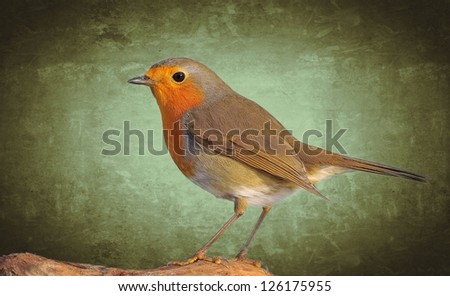 Robin,Erithacus rubecula on a green background.