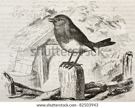 Robin old illustration (Erithacus rubecula). Created by Kretschmer and Wendt, published on Merveilles de la Nature, Bailliere et fils, Paris, 1878 - stock photo