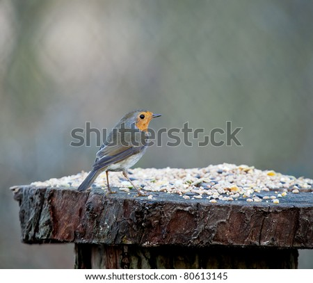 Robin on Seed Table