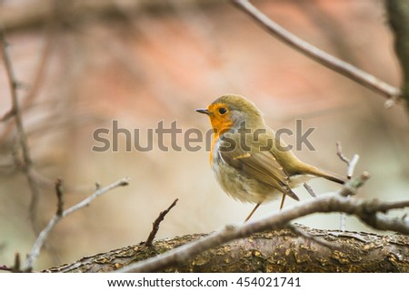 robin on the tree branch in early spring - stock photo