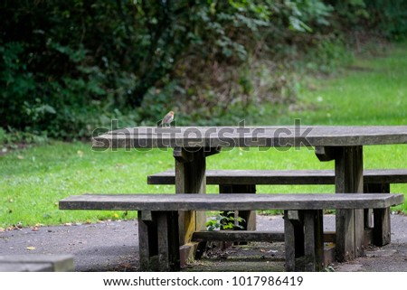 Robin on wooden picnic table in Sirhowy valley country park