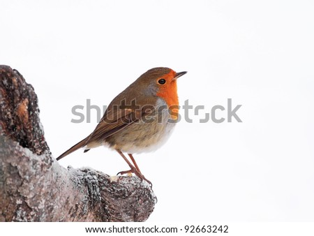 Robin perched on a log - stock photo