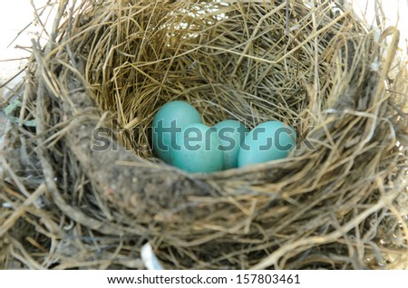 Robins nest with 4 eggs in it. Isolated on a white background. - stock photo