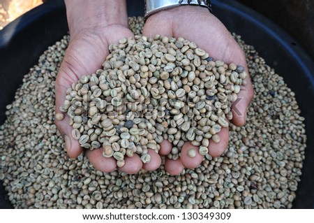 robusta green beans in hands - stock photo