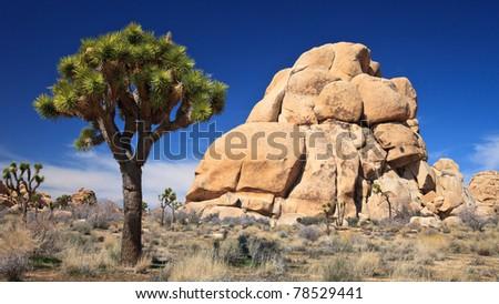 Rock climbers' spot in Joshua Tree National Park, California. - stock photo