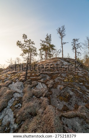 Rock covered with moss. landscape - stock photo