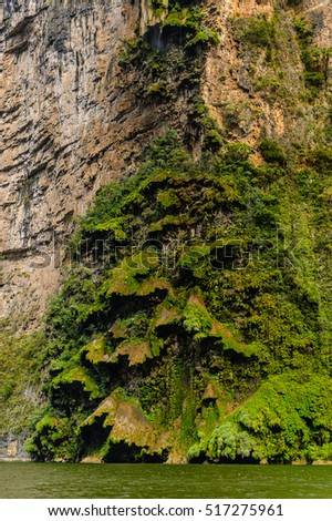 Rock formations similar to  a fair tree, Sumidero Canyon National Park, Chipas, Mexico.