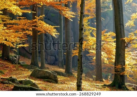 rock in beech forest - stock photo
