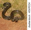 Rock python, keeping warm in the sun, Pythonidae family, wildlife series - stock photo