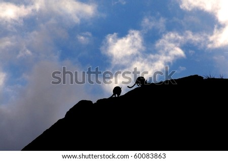 Rock Wallabies Silhouettes at Alice Springs - stock photo