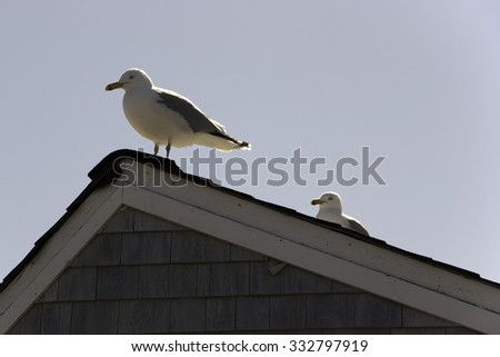Rockport, Massachusetts, USA - Two sea gulls on the roof of a house near the sea. - stock photo