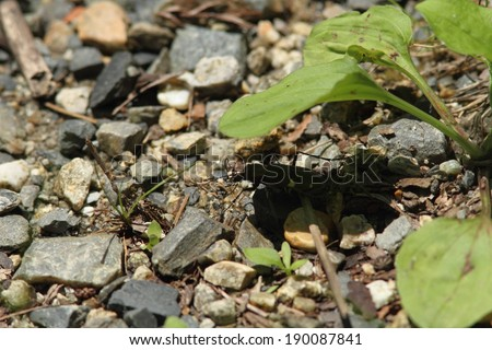 Rocks and pebbles with plants growing over them. - stock photo