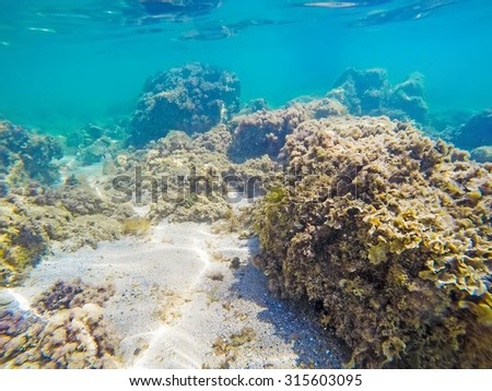 rocks and seaweeds on the sea floor in Sardinia, Italy - stock photo
