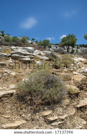 Rocks and vegetation with olive trees in Mediterranean country