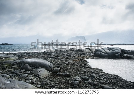 Rocky beach with penguins in Antarctica - stock photo
