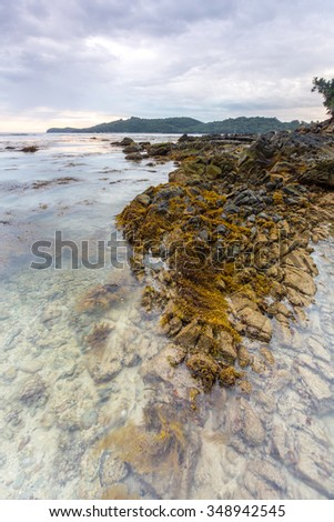 Rocky beach with yellow moss.