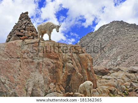 Rocky Mountain Alpine Scene with Mountain Goat and Rock Cairn - stock photo