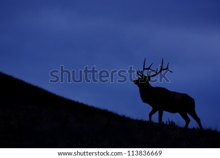 Rocky Mountain Elk against a deep blue sky, silhouette; Montana big game hunting - stock photo