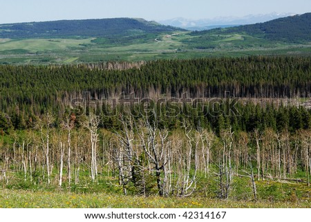 Rocky mountain foothills and forests in glacier national park, montana, usa - stock photo