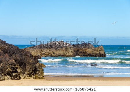 Rocky outcrop at the Oregon coast with hundreds of seabirds on it - stock photo