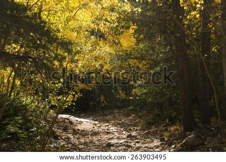 Rocky path through autumn yellow aspens and pines - stock photo