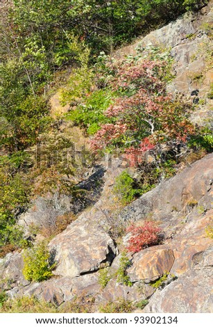 rocky road cut wall and colorful plants - stock photo