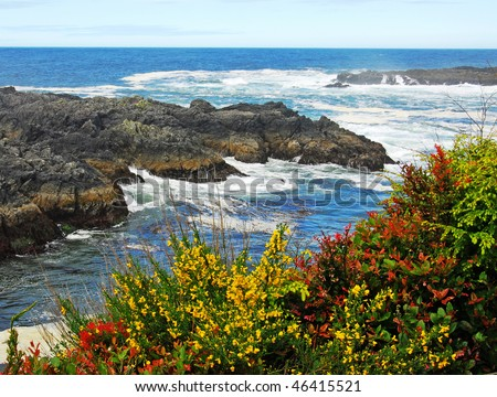 Rocky seashore in the pacific rim national park in vancouver island, british columbia, canada