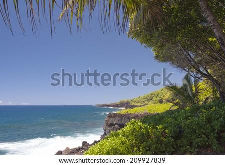 rocky shoreline of lava coast with palm tree - stock photo