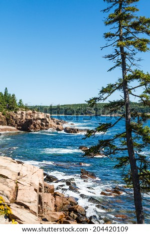 Rocky surf in Acadia National Forest beyond a tall fir tree - stock ...