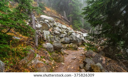 Rocky trail in the spruce forest among felled trees