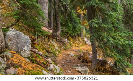 Rocky trail in the spruce forest among felled trees - stock photo