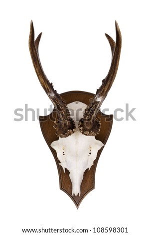 Roebuck trophy as wall decoration - stock photo